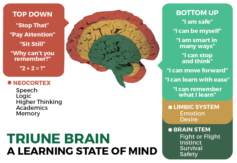 ila-triune-brain-graphic